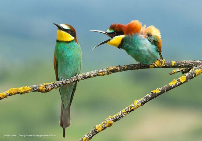 بامزه ترین عکس های مسابقه عکاسی کمدی حیات وحش