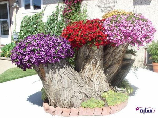 کاشتن گل و گیاه در تنه درختان